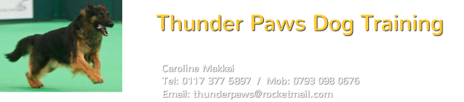 Thunder Paws Dog Training